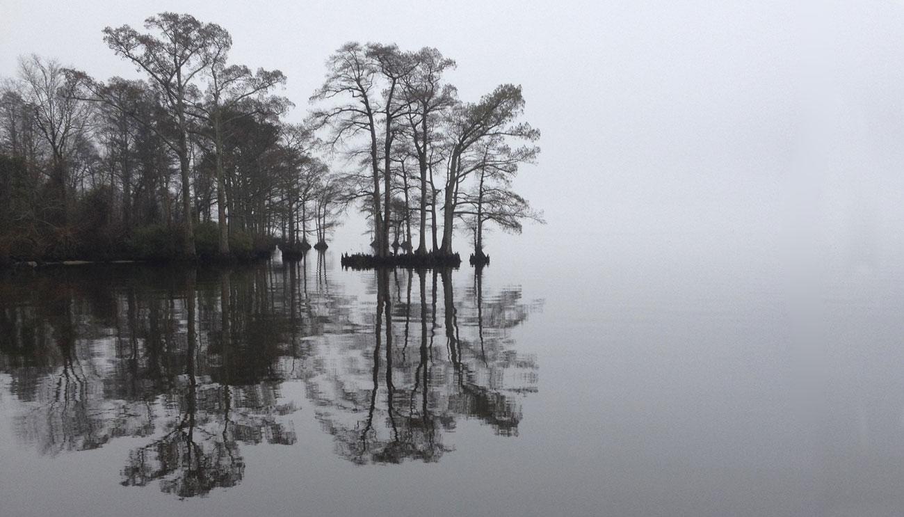 Edenton Cypress- Edenton, NC