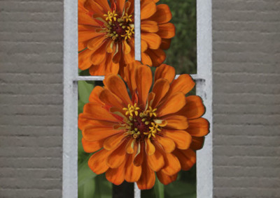 Window Dahlia- Edenton, NC