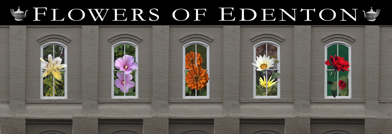 Flowers of Edenton - 1