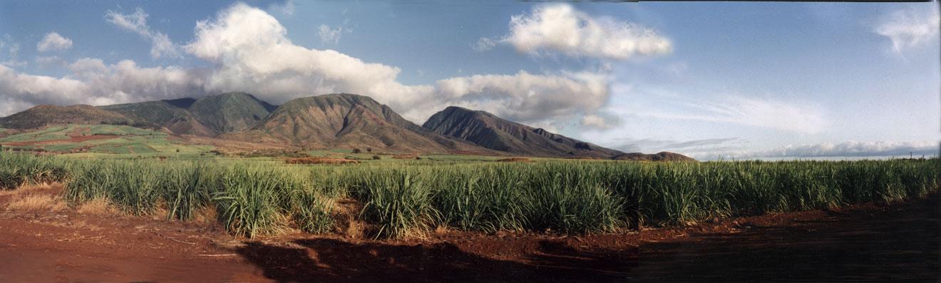 Maui Pine Mtns- HI