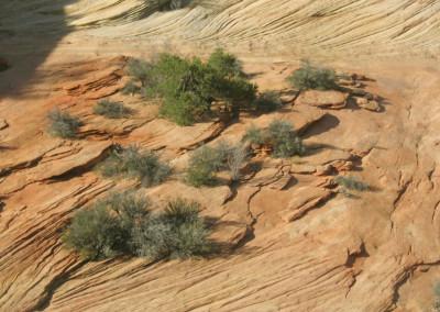 Rocky Plateau- Utah