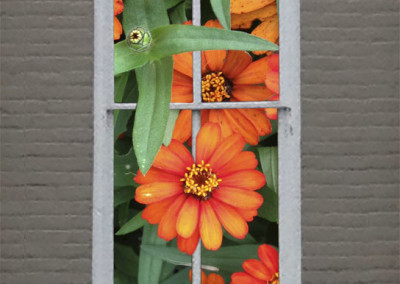 Window Zinnias- Edenton, NC