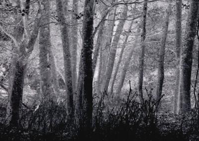 Foggy Lichen Ridden Woods- Point Reyes, CA