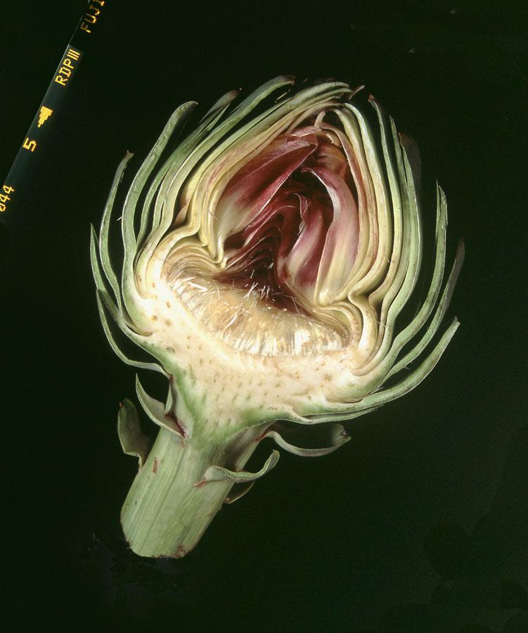 Artichoke Heart Still Life