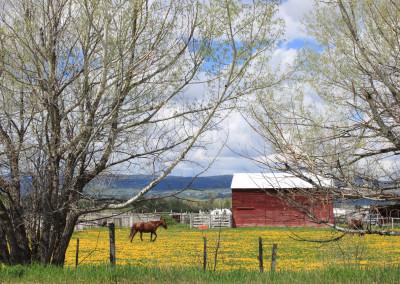 Tetonia Farm- Idaho